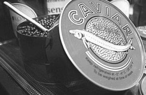Kaviar vom Stör