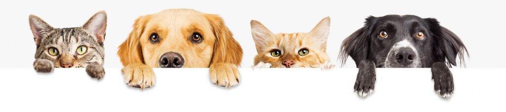 Teuerste Katzen der Welt